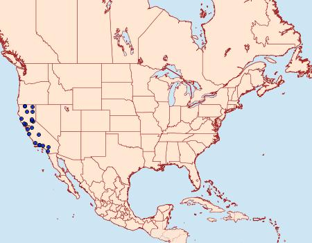 Distribution Data for Antaeotricha manzanitae