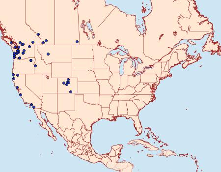 Distribution Data for Stretchia muricina