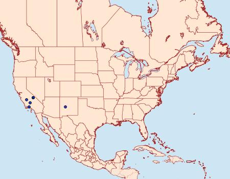 Distribution Data for Arotrura divaricata