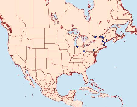 Distribution Data for Eucopina gloriola