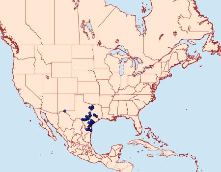 Distribution Data for Amblyscirtes celia