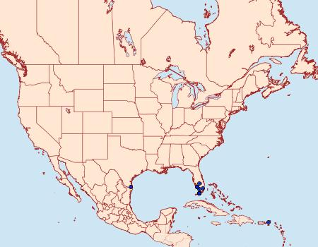 Distribution Data for Thyridopyralis gallaerandialis