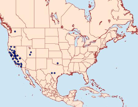Distribution Data for Myelopsis alatella