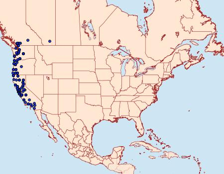 Distribution Data for Neoalcis californiaria