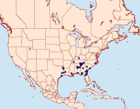 Distribution Data for Ceratonyx satanaria