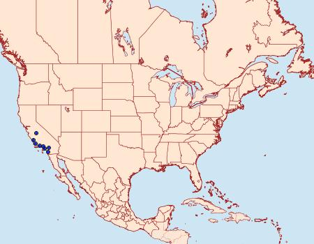 Distribution Data for Philtraea surcaliforniae
