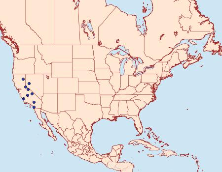 Distribution Data for Synchlora graefiaria
