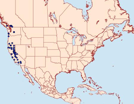 Distribution Data for Stamnoctenis pearsalli