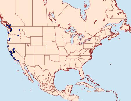 Distribution Data for Venusia obsoleta