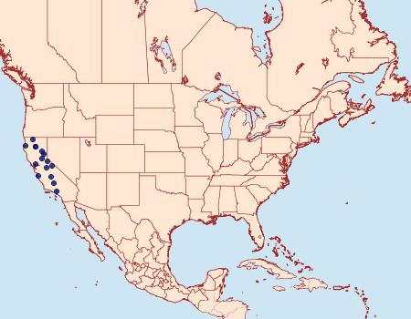 Distribution Data for Eupithecia rindgei