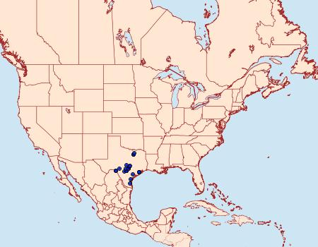 Distribution Data for Heterocampa astartoides