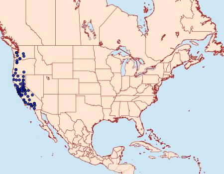 Distribution Data for Spilosoma vestalis