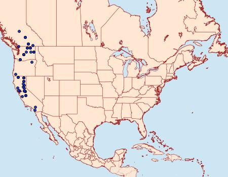 Distribution Data for Mycterophora longipalpata