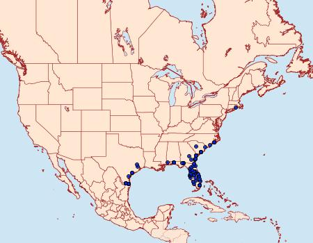 Distribution Data for Litoprosopus futilis