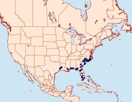 Distribution Data for Argyrostrotis flavistriaria