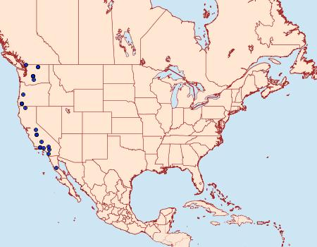 Distribution Data for Aseptis fanatica