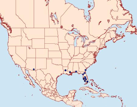 Distribution Data for Condica claufacta